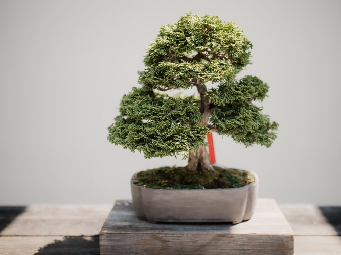 Sulla microfiction, o come curare un bonsai nel giardino della prosa